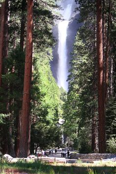 Yosemite ~ these sequoia trees were amazing! I went through here too and climbed near the waterfall. Man it's been like 2wks or 3 I wanna go back already