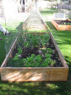 How to Make Squirrel Screens for Raised Garden Beds Gardens