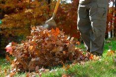 Autumn Leaves Enrich Soil - Perfect Gardening Tips Leaf Mulch, Sheridan Nurseries, Landscape Maintenance, Dry Leaf, Autumn Garden, Leaf Blower, Small Gardens, Tropical Plants, Growing Vegetables