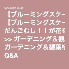 【ブルーミングスケープ】 だんごむし!!が花を食べる!? >> ガーデニング&観葉植物の育て方 Q&A