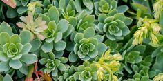 5 μυστικά για τη φροντίδα των παχύφυτων | Τα Μυστικά του Κήπου Herb Garden, Garden Plants, Flowers Garden, Vegetable Garden Design, Urban Farming, Edible Garden, Echeveria, Agriculture, Gardening Tips