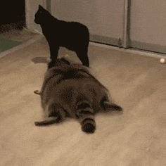 Image result for animated gifs of cats