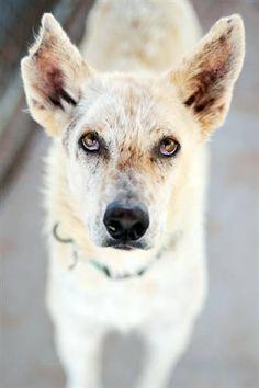 Adopt Kuzco at Best Friends Animal Sanctuary