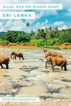 Sri Lanka ist unfassbar vielfältig und sollte unbedingt auf eurer Bucket-List stehen. Alle Tipps und einen tollen Erfahrungsbericht findet ihr hier.