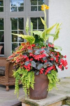 Variegated Canna, Coleus, Tuberous Begonia, and Lysimachia nummularia. Container Flowers, Container Plants, Outdoor Planters, Outdoor Gardens, Tuberous Begonia, Gemüseanbau In Kübeln, Container Gardening Vegetables, Flower Pots, Flower Ideas