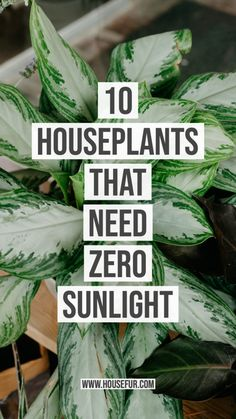 10 Houseplants That Need (Almost) Zero Sunlight | House Fur...