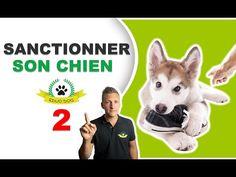 Education Canine, Bindi, Poppy, Dog, Pets, Animals, Practical Life, Farm Animals, Behavior