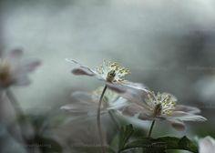 Tale of spring. Fotokunst