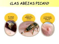 Las abejas para Educación Infantil