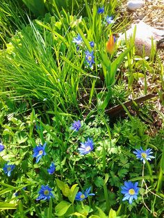 Using The Correct Plants In Your Landscaping