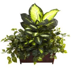 Nearly Golden Dieffenbachia, Philo and Pothos Silk Plant in Wood Planter