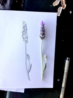Lavender study, from a nice day in the park ~ by Maddy Young  #art #journal