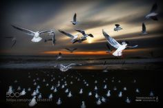 Seagulls fly by leskmdzhru