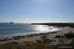 Elephant Seals in San Simeon | Pacific Coast Highway Road Trip | Hello Raya Blog