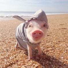 "#webstahalloween Instagram photos | Look who is excited for ""Shark Week!"""