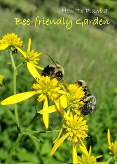 What Are Bee-Friendly Plants? #Beesponsible #ad Learn how to plant a bee garden today!