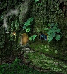Fairy home in trees- so many choices! Love love love these