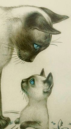 ●••°‿✿⁀ Cat ‿✿⁀°••●, kitten and cat drawing.