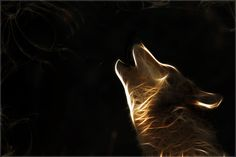 awesome wolf pics | cachedwallpaper of the wolf backgrounds need a real wolf find