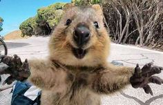 The quokka jumped at Campbell as if to say 'come back.'