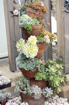 Succulents in this tipsy pot planter make a gorgeous display. Succulents in this tipsy pot planter m Succulents In Containers, Container Plants, Cacti And Succulents, Planting Succulents, Container Gardening, Planting Flowers, Succulent Planter Diy, Succulent Gardening, Organic Gardening