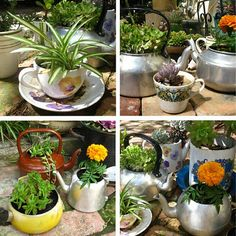 tea kettle pan planters