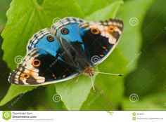 Butterfly Macro Stock Photography - Image: 4534252