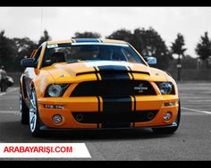 ford mustang araba yarışı hakkında bilgi