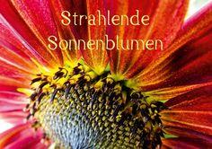 Strahlende Sonnenblumen - CALVENDO Schau mich an! Meine prachtvollen Farben bringen Dich zu Strahlen.