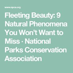 Fleeting Beauty: 9 Natural Phenomena You Won't Want to Miss · National Parks Conservation Association