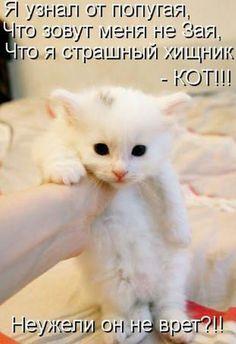 УЗНАЛ САМ  -  РАССКАЖИ ДРУГОМУ!: Очередная порция юмора в позитивной подборке котом...