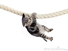 Funny baby cat hanging on rope isolated