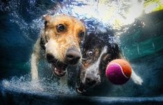 Seth Casteel shoots dogs underwater. And then gets out of the way quickly!