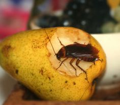 Bug out: Get rid of roaches by understanding where they come from and what they want.