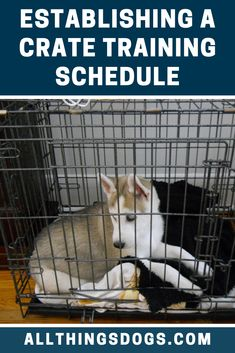 Getting your puppy into a routine is a really good idea. It will ensure your puppy is going out for regular toilet breaks and teaches your puppy to learn what to expect and when. Follow our crate training schedule and build training in throughout the day.  #cratetraining #cratetrainingapuppy #cratetrainingschedule Husky Training, Crate Training, Training Your Puppy, Potty Training, Puppy Feeding Schedule, Puppy Schedule, Husky Breeds, Sleeping Puppies, Training Schedule
