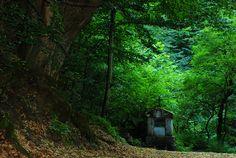 forest...gypsy wagon....roamance....
