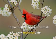 Toplu mail - http://www.toplumail.info