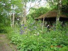 Our gazebo in May. The columbines are in full  bloom.
