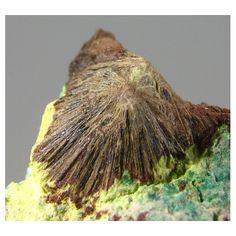 Sharpite, Ca(UO2)6(CO3)5(OH)4 · 6H2O,  Shinkolobwe Mine, Shinkolobwe, Katanga, Congo (Democratic Republic). Brownish-green, radial crystals of sharpite, an extremely rare uranyl-carbonate from Shinkolobwe Mine (type locality). Associated with some yellow kasolite Gem Stones, Chakra Stones, Rocks And Minerals, Crystals And Gemstones, Geology, Pretty, Nature, Beauty, Beautiful