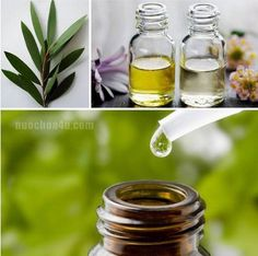 Tea Tree Oil - Trị mụn