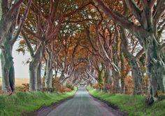 ファンタジー世界へとつながっているような、異空間を演出しているアイルランドの並木道 : カラパイア