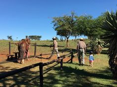 Travel With Kids, Family Travel, South Africa, Horses, Animals, Travel, Family Trips, Animales, Animaux