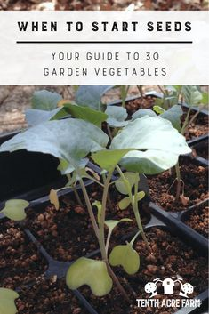 When to Start Seeds: Your Guide to 30 Garden Vegetables: Do you wonder when the ideal time is to start seeds to have the most success? This guide has all you need to know about when to start seeds for 30 of the most popular garden vegetables. #gardening