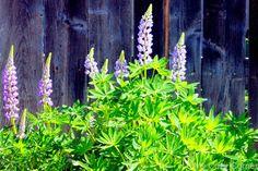 My Cozy Corner: April Garden Journal