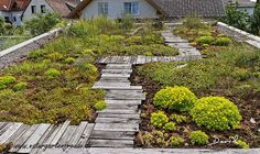 A natural roof has numerous positive factors at economical, habitat and political stage. Vertical Herb Gardens, Diy Pergola, Roof, Green Roof, Hot Tub Outdoor, Grass Pavers, Wildlife Gardening, Outdoor Pergola, Roof Garden