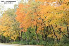 Colors of Fall/Autumn (C)BAC Photography (262)496-5490