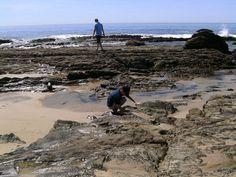 Checking out the creatures @ beautiful Laguna Beach!
