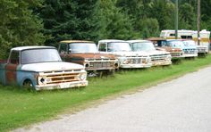 A row of forgotten Ford pickups. from left to right: A '62, '63, '64, '61, a '65 and a pair of '66 models.