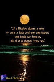 """If a Muslim plants a tree, or sows a field and men and beasts and birds eat from it, all of it is charity from him"". Quran Quotes, Hindi Quotes, Islamic Quotes, Alhamdulillah, Hadith, Charity Quotes, Allah Love, Islamic World, Keep The Faith"