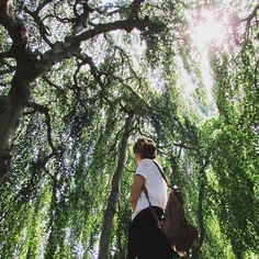 【fra_man_】さんのInstagramをピンしています。 《Where I find myself 🌲 #garden #botanicalgarden #forest #tree #beautiful #summer #oldphoto #remembering #amazing #green #nature #view #landscape #lake #exploring #sun #naturelovers #memories #walk #germany #frankfurt #植物園 #木 #森 #美しい #自然 #ドイツ #夏休み #日 #平和》